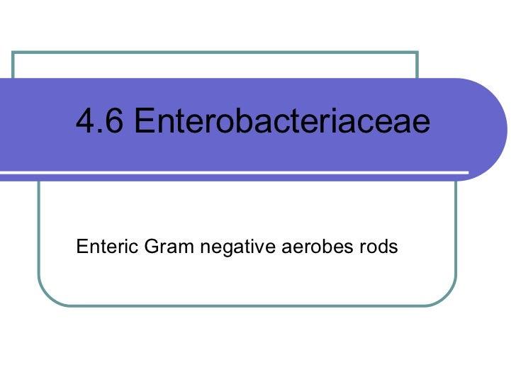 4.6 EnterobacteriaceaeEnteric Gram negative aerobes rods