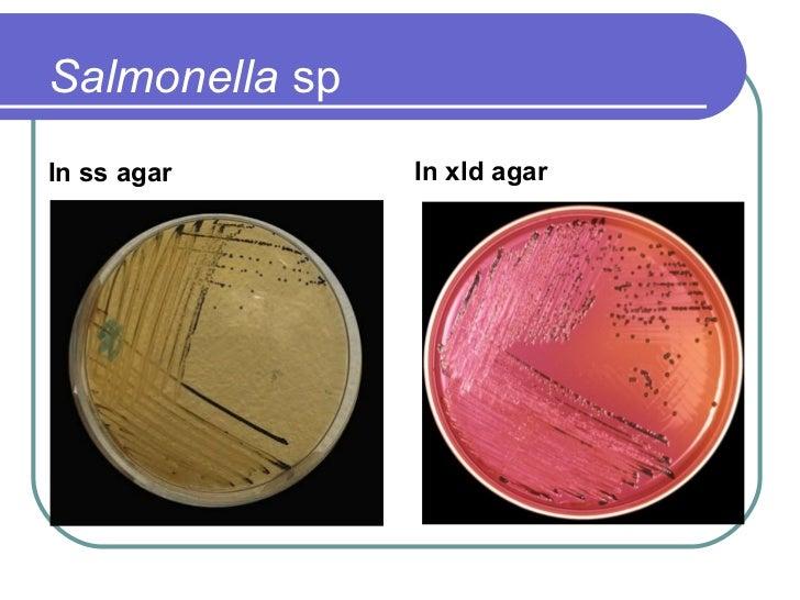 Enterobacteriaceae & Brucella