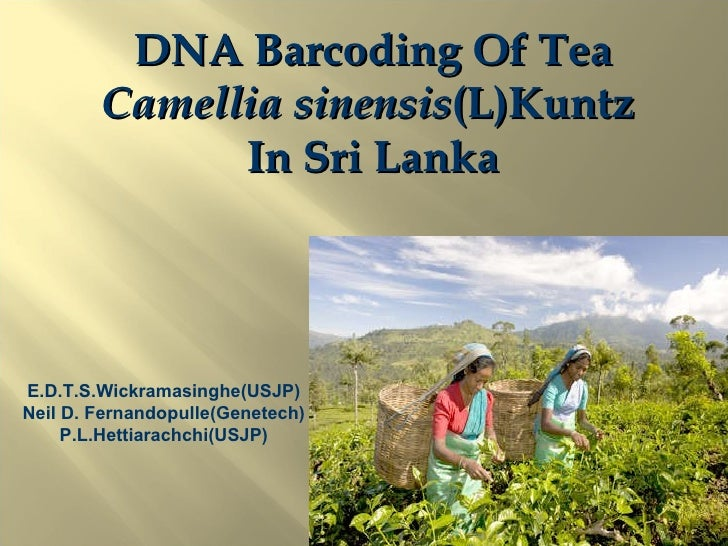 4 68 Wickramasinghe  E[1].D.T.S DNA barcoding of Tea