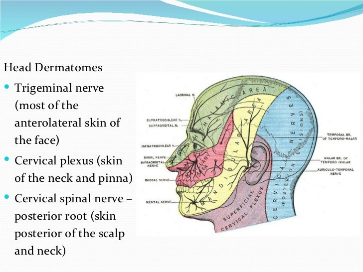 Slap Facial dermatome map