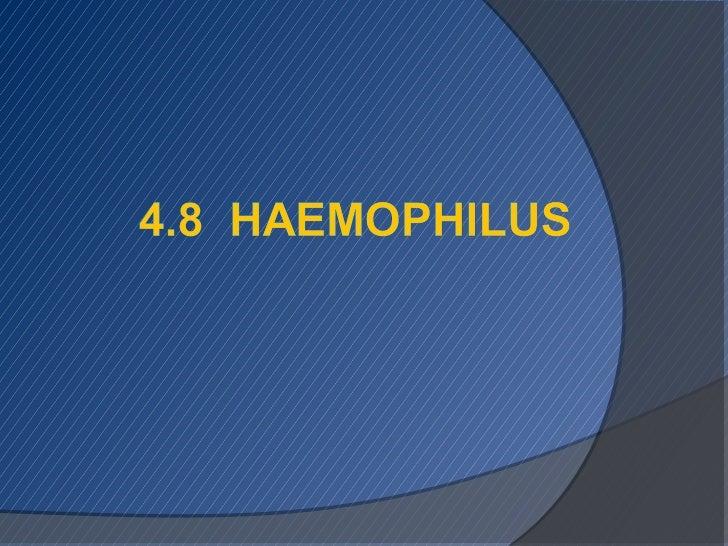 Haemopilus,Staphylococous & Streptococcus