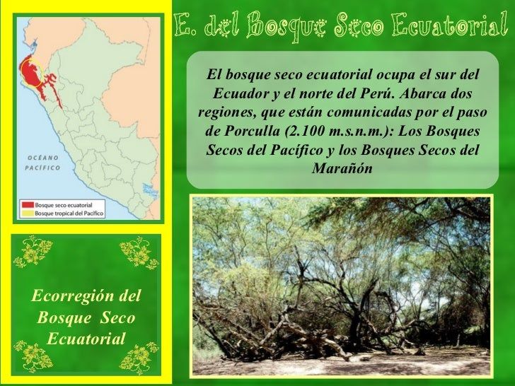 El bosque seco ecuatorial ocupa el sur del Ecuador y el norte del Perú. Abarca dos regiones, que están comunicadas por el ...