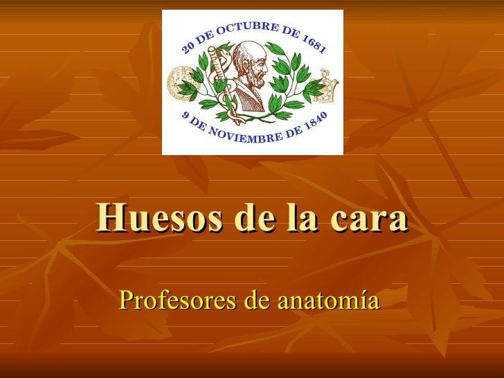 Huesos de la cara Profesores de anatomía