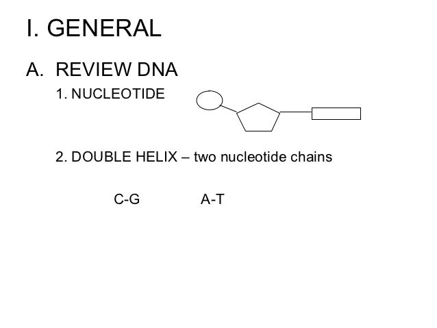 I. GENERALA. REVIEW DNA  1. NUCLEOTIDE  2. DOUBLE HELIX – two nucleotide chains          C-G         A-T