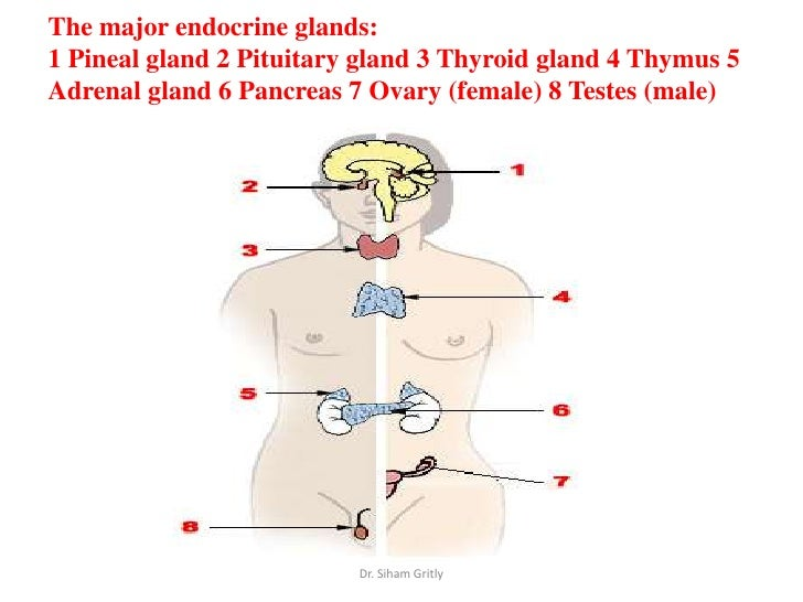 Effects of Diabetes on Salivary Gland Protein Expression of ...