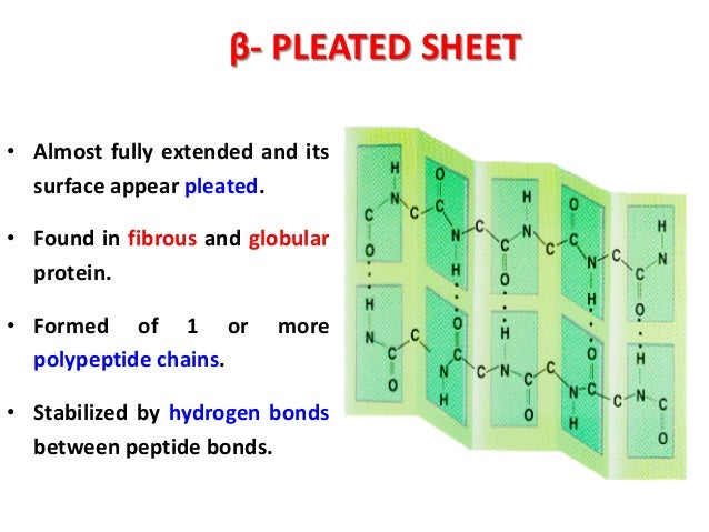 Alpha Helix And Beta Pleated Sheet Food proteins