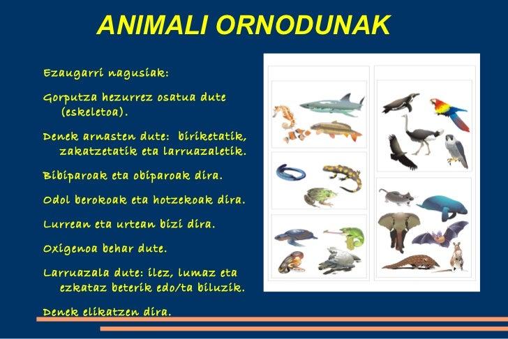 learn more at animalhi - photo #11