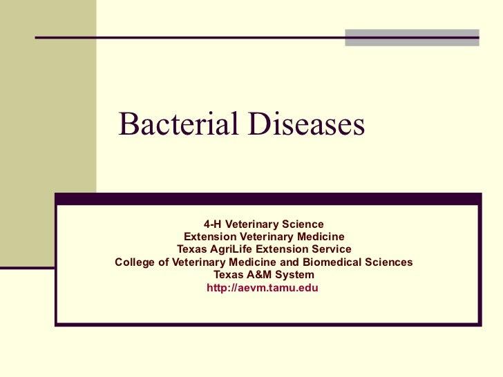 4 h bacterial diseases