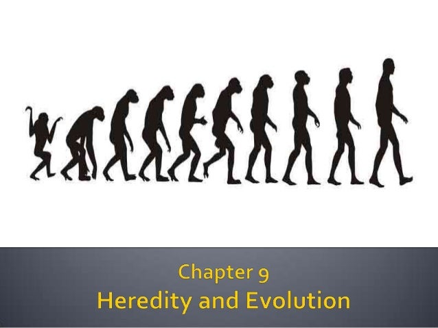 history of heredity and evolution Heredity and evolution - free download as pdf file (pdf), text file (txt) or read online for free.