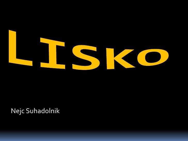 Lisko - Nejc Suhadolnik