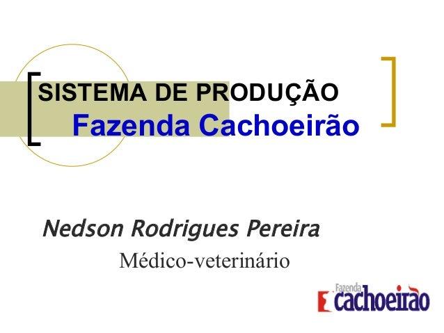 SISTEMA DE PRODUÇÃO Fazenda Cachoeirão Nedson Rodrigues Pereira Médico-veterinário