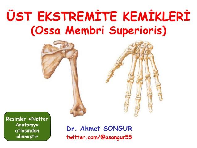Anatomi ders notu - üst ekstremite kemikleri / Prof. Dr ...