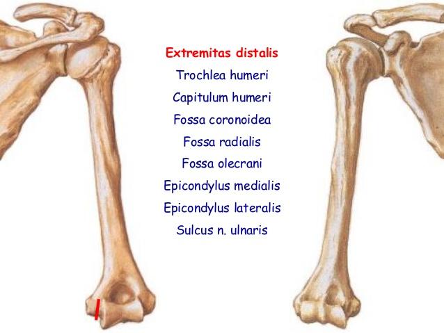 anatomi-ders-notu-st- ...