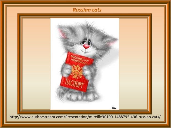 436 - Russian cats