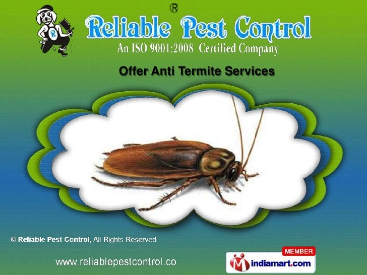 Offer Anti Termite Services