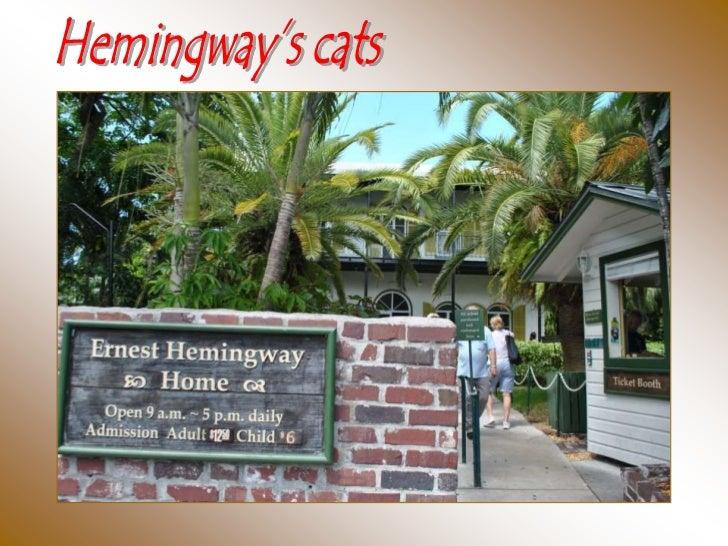 442 - Hemingway's cats