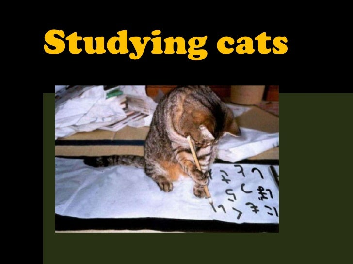 462 - Studying cats