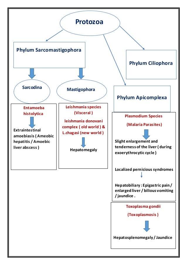 portal hypertension