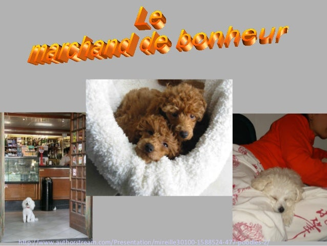 http://www.authorstream.com/Presentation/mireille30100-1588524-477-poodles-2/