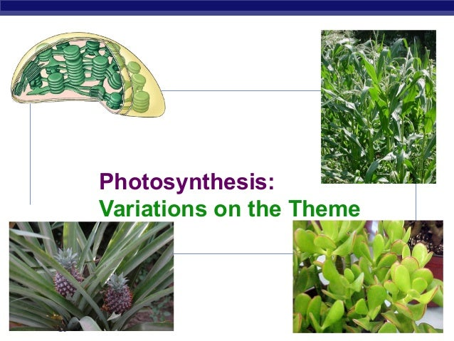 Photosynthesis: Variations on the Theme  AP Biology  2007-2008