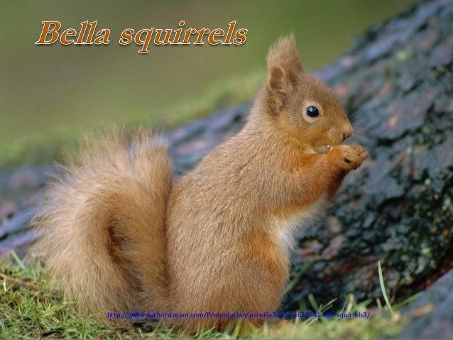 http://www.authorstream.com/Presentation/mireille30100-1620841-496-squirrels3/