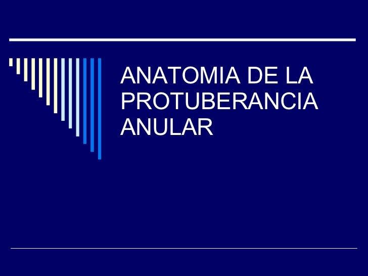 ANATOMIA DE LA PROTUBERANCIA ANULAR