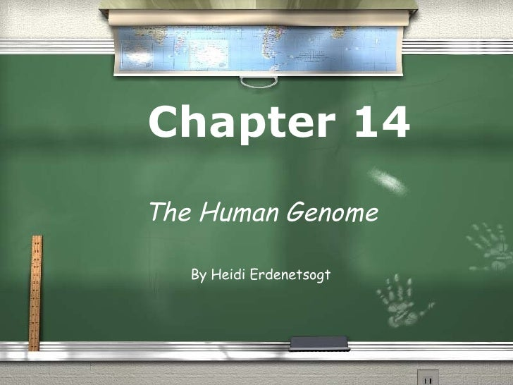 Chapter 14 The Human Genome By Heidi Erdenetsogt