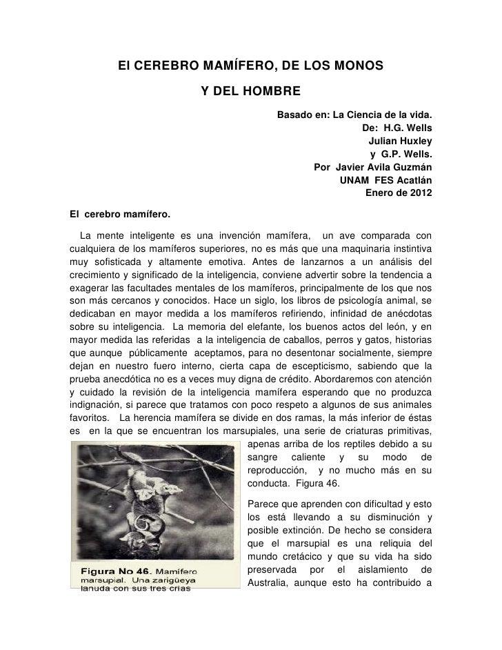 El CEREBRO MAMÍFERO, DE LOS MONOS                              Y DEL HOMBRE                                               ...