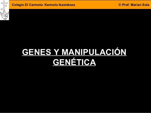 4DBH 1 Colegio El Carmelo- Karmelo Ikastetxea © Prof. Marian Sola GENES Y MANIPULACIÓN GENÉTICA