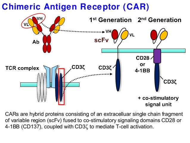 Image result for chimeric antigen receptor t cells