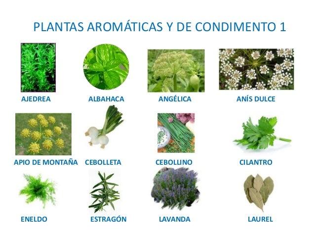 4 producci n vegetal for Tipos de plantas aromaticas