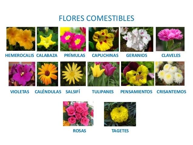 4 producci n vegetal - Clases de flores y sus nombres ...