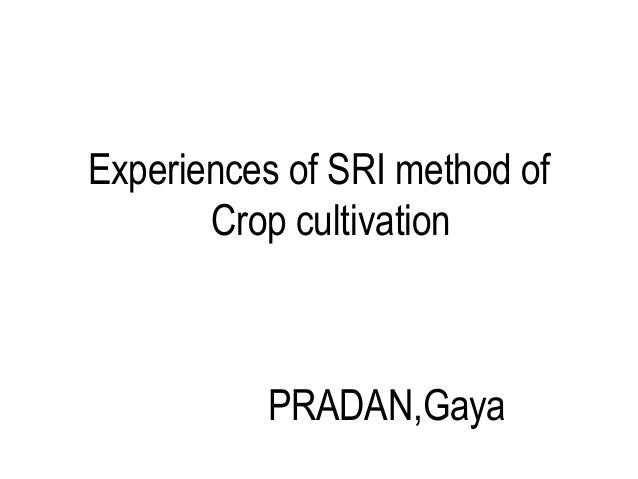 Experiences of SRI method of       Crop cultivation          PRADAN,Gaya