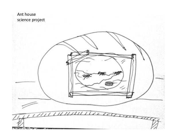 Ant housescience project