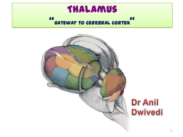 4 thalamus