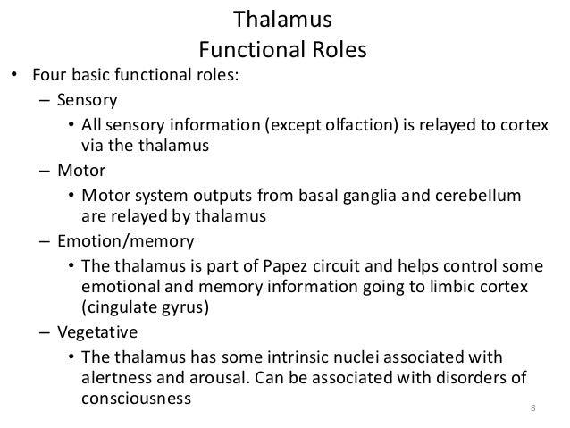 Thalamus Function And Location Thalamus Function Thalamus
