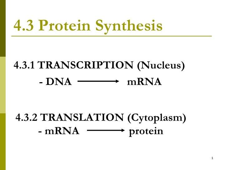 4.3 Protein Synthesis <ul><li>4.3.1 TRANSCRIPTION (Nucleus) </li></ul><ul><li>  - DNA  mRNA </li></ul>4.3.2 TRANSLATION (C...