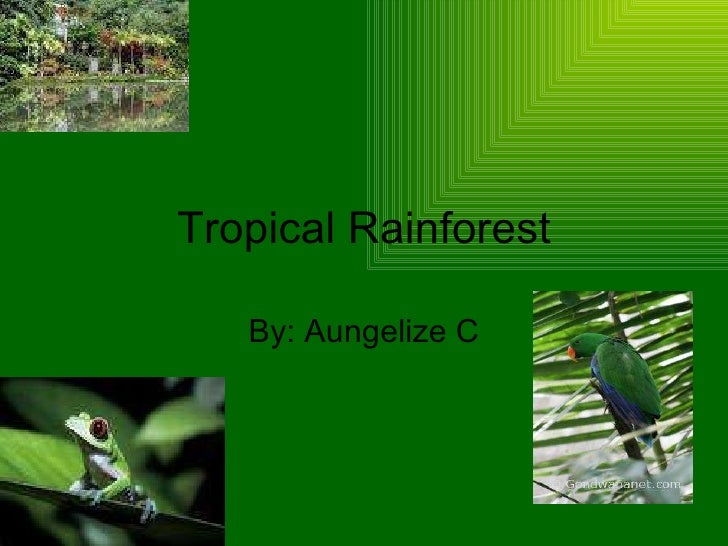 Tropical Rainforest By: Aungelize C
