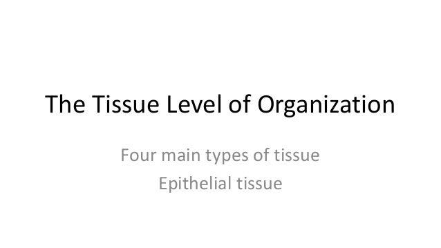 4 tissue types and epithelium