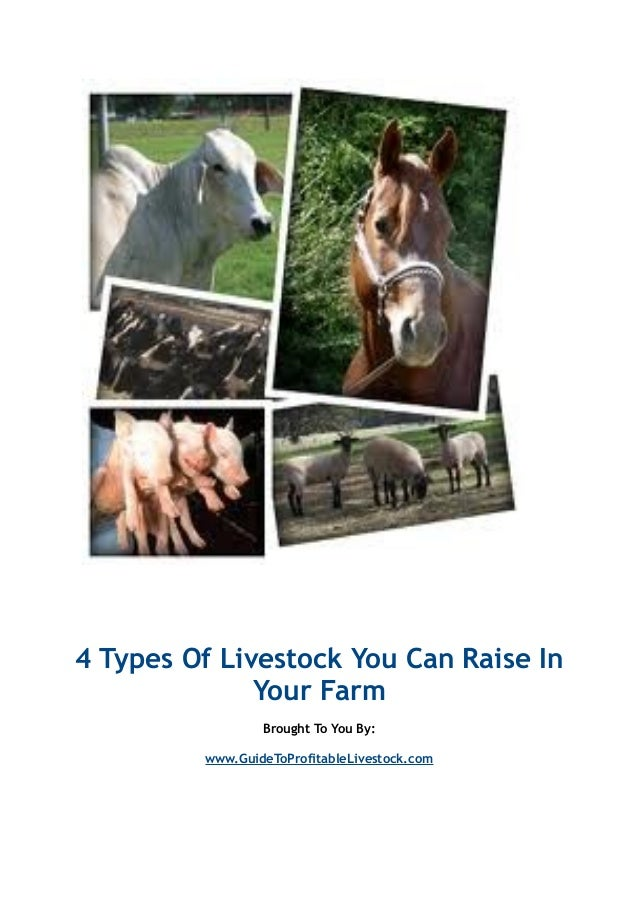 4 Types Of Livestock You Can Raise In Your Farm Brought To You By: www.GuideToProfitableLivestock.com