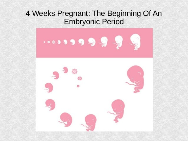 4 weeks pregnant what to expect