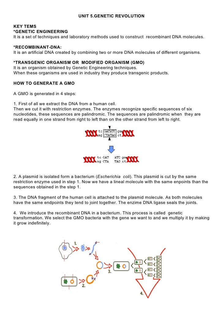 UNIT 5.GENETIC REVOLUTIONKEY TEMS*GENETIC ENGINEERINGIt is a set of techniques and laboratory methods used to construct re...