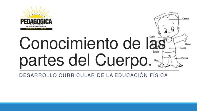 Conocimiento de las partes del Cuerpo. DESARROLLO CURRICULAR DE LA EDUCACIÓN FÍSICA