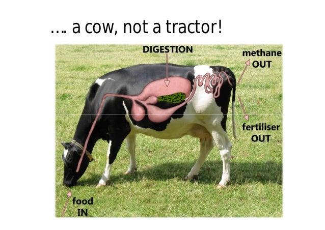 biogas cow - photo #15