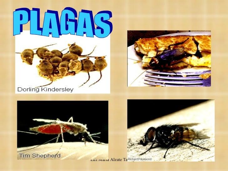 5 1 control de plagas for Control de plagas badajoz