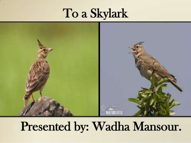 To a SkylarkPresented by: Wadha Mansour.