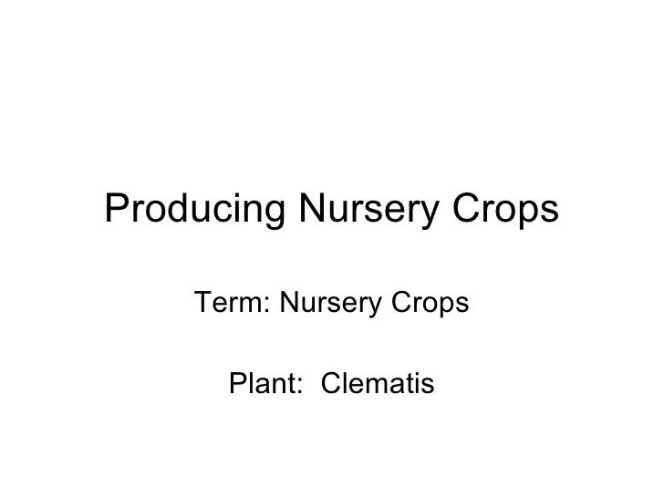 Producing Nursery Crops Term: Nursery Crops Plant:  Clematis