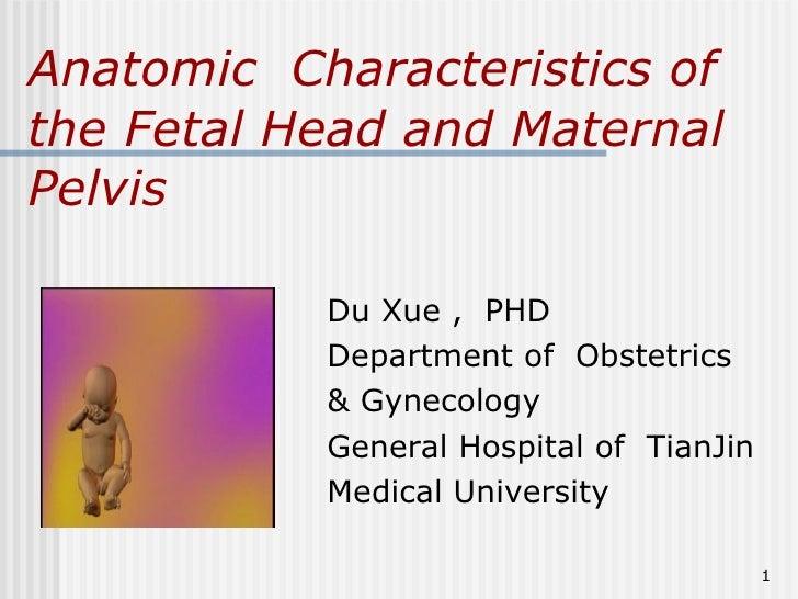 5.Anatomic Characteristics Of The Fetal Head And Maternal