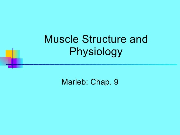 Muscle Structure and Physiology Marieb: Chap. 9