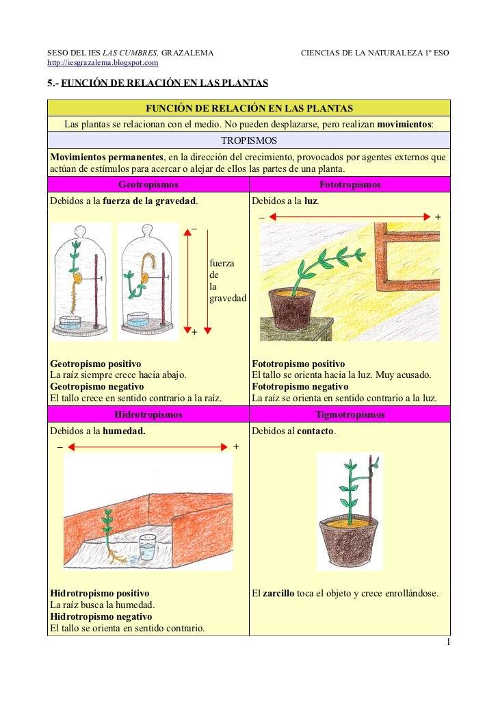 5 funci n de relaci n en las plantas for Funcion de las plantas ornamentales